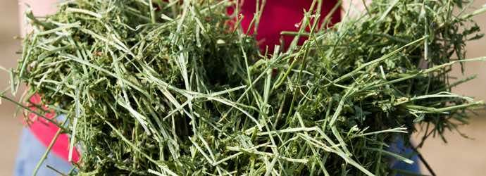 What Type of Hay Should I Feed My Horse?