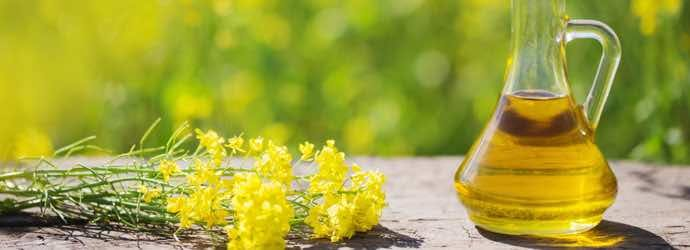 Benefits of Canola Oil for Horses