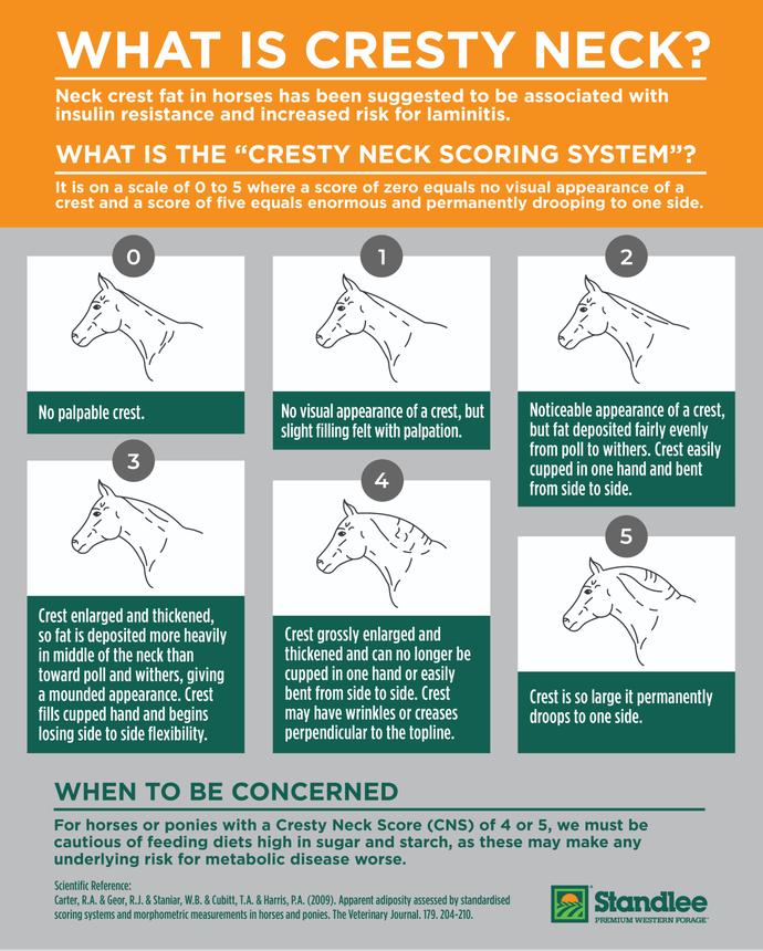 Standlee Cresty Neck Infographic