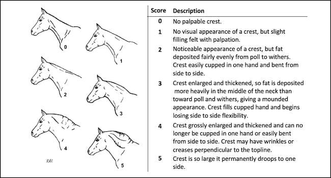Standlee Cresty Neck Scoring System Chart