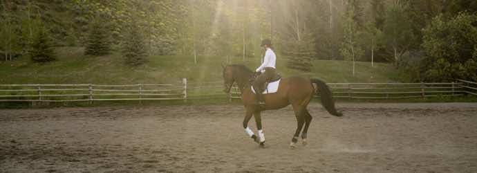How Feeding Teff Grass Pellets Can Help You and Your Horse