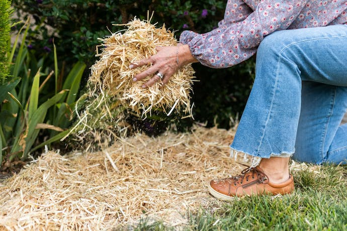 Person holding hay