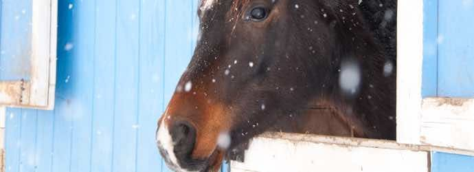 Feeding Horses: What You Need to Know About Forage & Winter