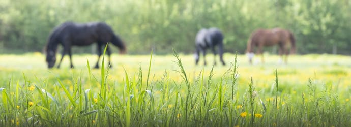 Cresty Neck – A Precursor to Metabolic Disease in Horses