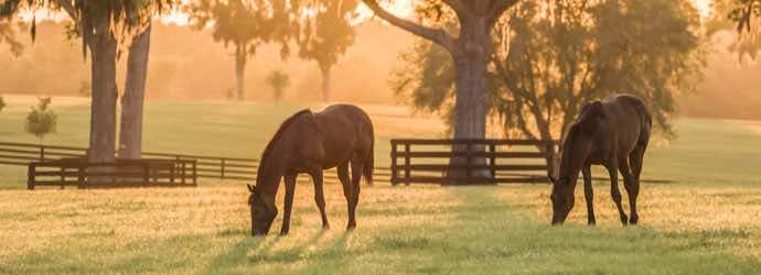 What Should I Consider with Impaction Colic in Horses?
