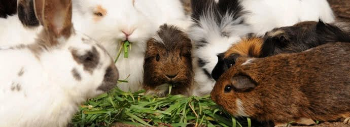 What type of forage is best for your small animal?