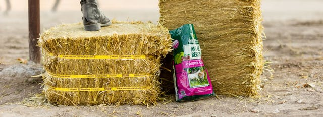 What is the Difference Between Hay, Straw and Premium Forage?