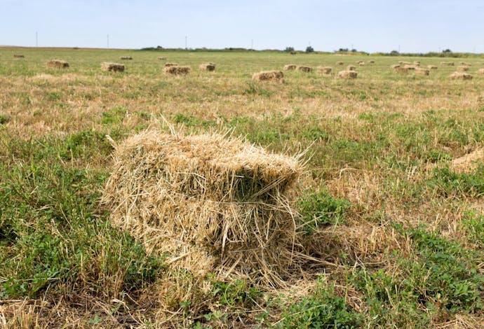 Straw in field
