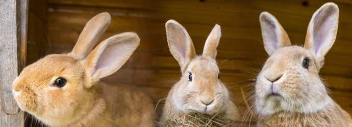 Is Your Rabbit Bored?