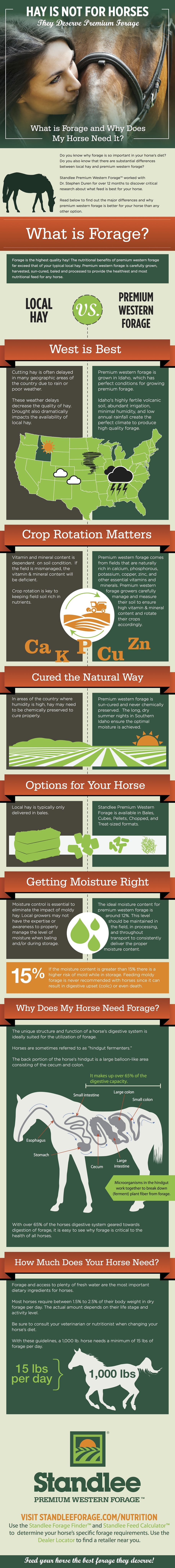 Hay is Not for Horses; They Deserve Premium Forage