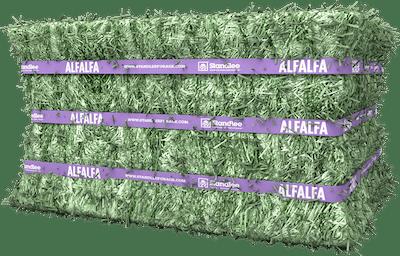 Premium Alfalfa Compressed Bale Product Photo
