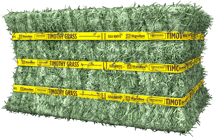 Certified Timothy Grass Compressed Bale