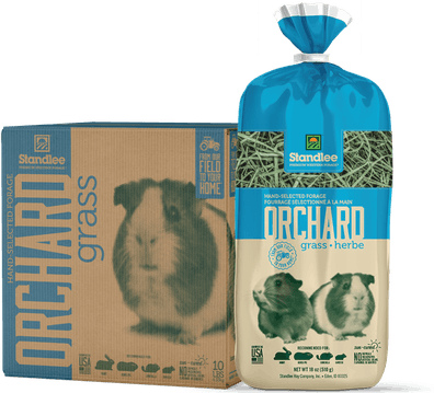 Hand-Selected Orchard Grass Product Photo