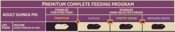 Adult Guinea Pig Feeding Program Chart